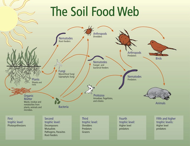 soil-food-web.jpg
